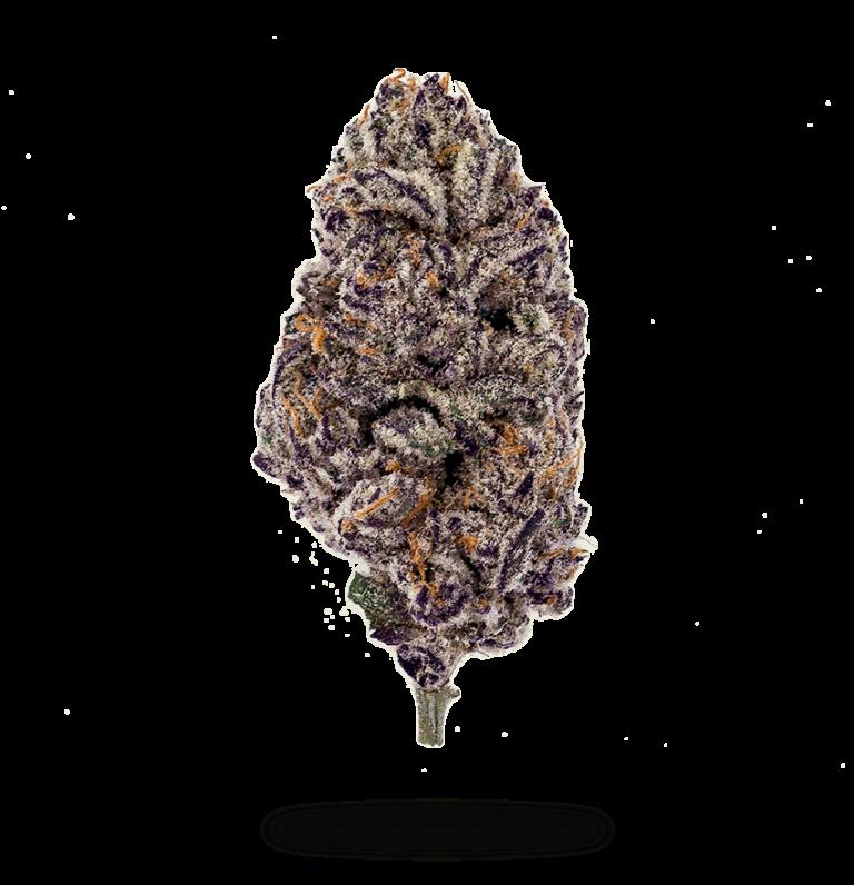 21_Insa_PurplePunch_Flower_850x881