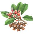 Icon-Caryophyllene