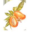 Icon-Myrcene